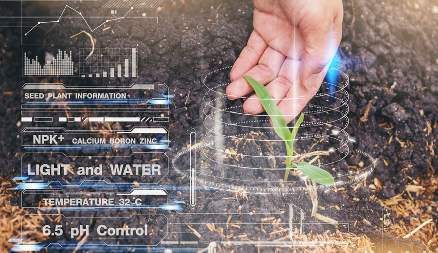 IoT Solutions for Food Production